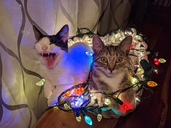 holiday kittens.jpg